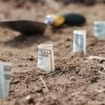 Economic-Gardening  The Right Way